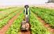 रामेछापका दिपकको अस्ट्रेलियामा कृषि क्रान्तिः ५० हजार लगानी मिलियन डलर कारोबार